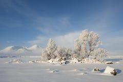 Bevroren bomen, Stock Afbeelding