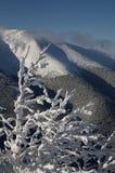 Bevroren bomen 2 Royalty-vrije Stock Afbeeldingen