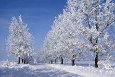 Bevroren bomen Stock Afbeeldingen