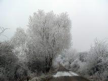 Bevroren bomen Stock Foto's
