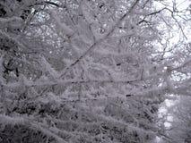 Bevroren bomen Stock Foto