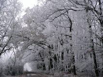 Bevroren bomen Royalty-vrije Stock Afbeeldingen