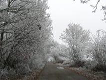 Bevroren bomen Royalty-vrije Stock Foto