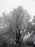 Bevroren bomen Stock Afbeelding