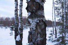 Bevroren bomen stock fotografie