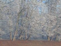 Bevroren bomen Royalty-vrije Stock Afbeelding