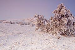 Bevroren bomen in de bergen Royalty-vrije Stock Fotografie