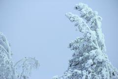 Bevroren bomen in de sneeuw Royalty-vrije Stock Afbeelding