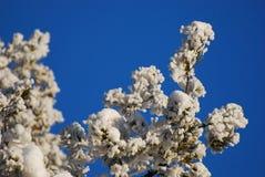 Bevroren bomen in de winter Stock Afbeeldingen