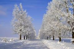 Bevroren bomen HDR Royalty-vrije Stock Afbeelding