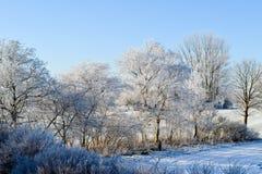 Bevroren bomen op de winter Stock Afbeelding