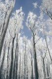 Bevroren bomen op koude de winterdag royalty-vrije stock foto