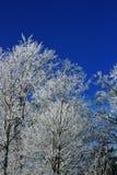 Bevroren bomen tegen blauwe hemel royalty-vrije stock fotografie