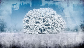 Bevroren boom Stock Afbeelding