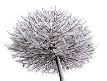 Bevroren boom Stock Afbeeldingen