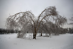 Bevroren boom in de winter Royalty-vrije Stock Fotografie