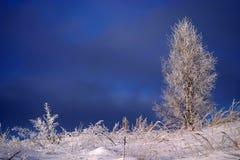 Bevroren boom en gras royalty-vrije stock afbeeldingen