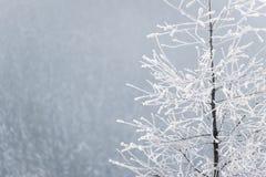 Bevroren boom in het nevelige de winterlandschap Stock Afbeeldingen