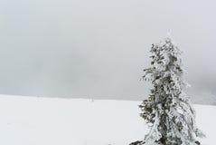 Bevroren boom met witte sneeuw op de achtergrond royalty-vrije stock afbeelding