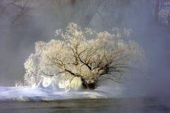 Bevroren boom naast rivier Royalty-vrije Stock Foto's