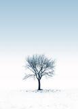 Bevroren boom op een sneeuwdag royalty-vrije stock fotografie