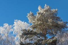 Bevroren boomtakken stock foto