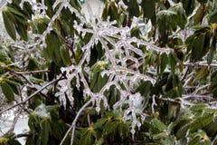 Bevroren boomtakken in ijs Royalty-vrije Stock Foto