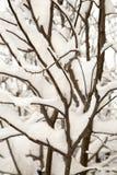 Bevroren boomtakken op de winter Stock Afbeelding