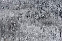 Bevroren bos Royalty-vrije Stock Afbeeldingen