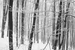 Bevroren bos Stock Foto
