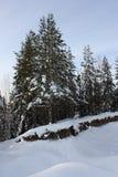Bevroren bos stock afbeeldingen