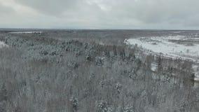 Bevroren bos stock videobeelden