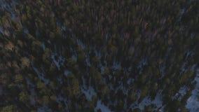 Bevroren bos stock video