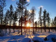 Bevroren bos in Finland stock afbeeldingen