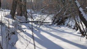 Bevroren bosaardstroom in de sneeuwbovenkanten van bomenlandschap stock videobeelden