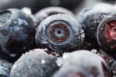 Bevroren bosbessen Macro close-up ondiepe diepte van mening Stock Foto's