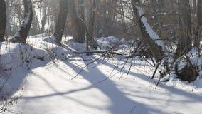 Bevroren bosstroom in de sneeuwbovenkanten van het landschap van de bomenaard stock video