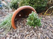 Bevroren bukshout met decoratie Stock Foto's