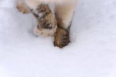 Bevroren cat's poten in de sneeuw Royalty-vrije Stock Fotografie