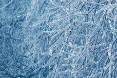 Bevroren in de takken van de ijsboom Bevroren boomtak in de winter Stock Afbeeldingen