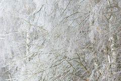 Bevroren in de takken van de ijsboom Bevroren boomtak in de winter Royalty-vrije Stock Fotografie