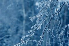 Bevroren in de takken van de ijsboom Bevroren boomtak in de winter Stock Foto