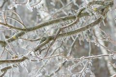 Bevroren in de takken van de ijsboom Bevroren boomtak in de winter Stock Afbeelding