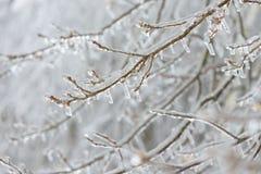 Bevroren in de takken van de ijsboom Bevroren boomtak in de winter Royalty-vrije Stock Foto's