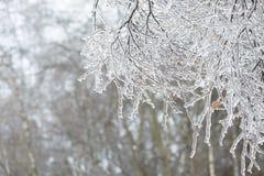 Bevroren in de takken van de ijsboom Bevroren boomtak in de winter Royalty-vrije Stock Afbeelding