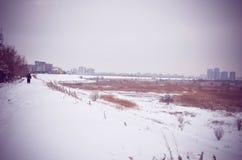 Bevroren de Winter Sneeuwlandschap Vacaresti Deltaboekarest Royalty-vrije Stock Afbeeldingen