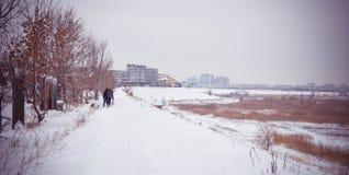 Bevroren de Winter Sneeuwlandschap Vacaresti Deltaboekarest Stock Fotografie