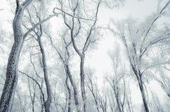 Bevroren de winterbos op de hemel stock afbeelding