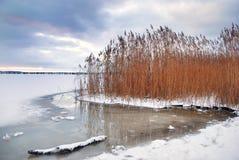 Bevroren de winterkust en gras Royalty-vrije Stock Afbeeldingen