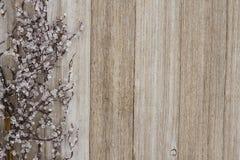 Bevroren de wintertak doorstaan hout royalty-vrije stock fotografie